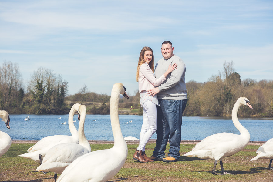 a man and a woman embracing by a lake with swans in front of them
